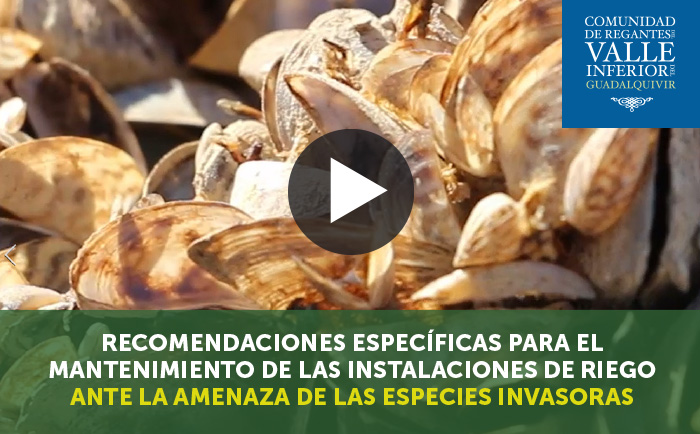 Recomendaciones para el mantenimiento de las instalaciones de riego ante la amenaza de especies invasoras - Vídeo