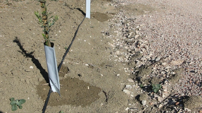 Un proyecto pionero en Andalucía acredita la viabilidad y el potencial de la aplicación de aguas regeneradas al cultivo del olivar