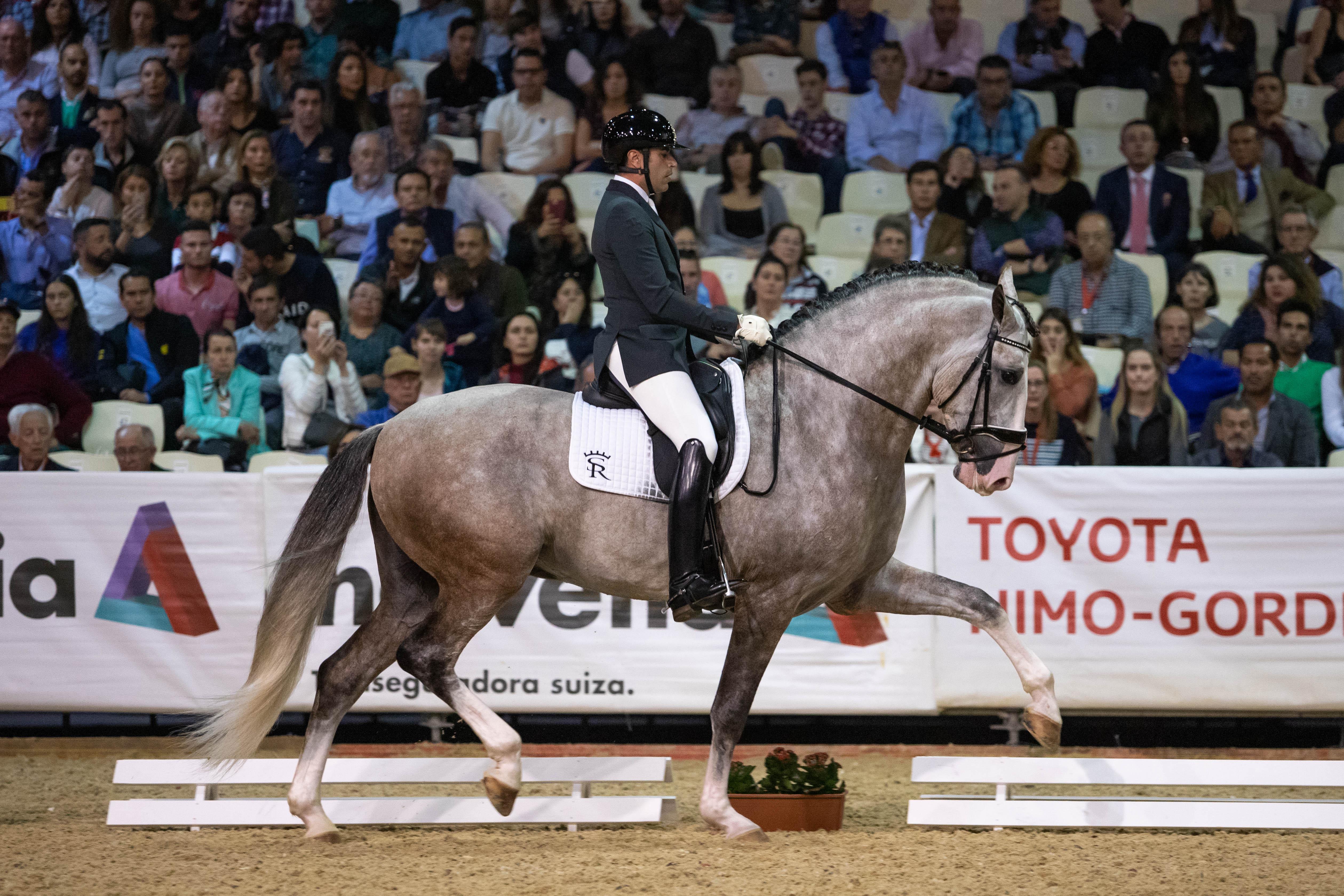 FOTOGRAFÍAS - Yucatán de Ramos, el caballo propiedad de Sergio Ramos, se proclama Campeón del Mundo 2018 en SICAB